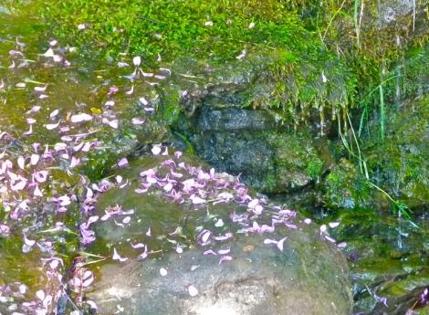 petals-and-moss