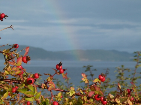 rosehips-rainbow
