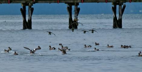 ducks landing 750