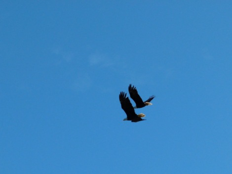 double eagles soaring 750